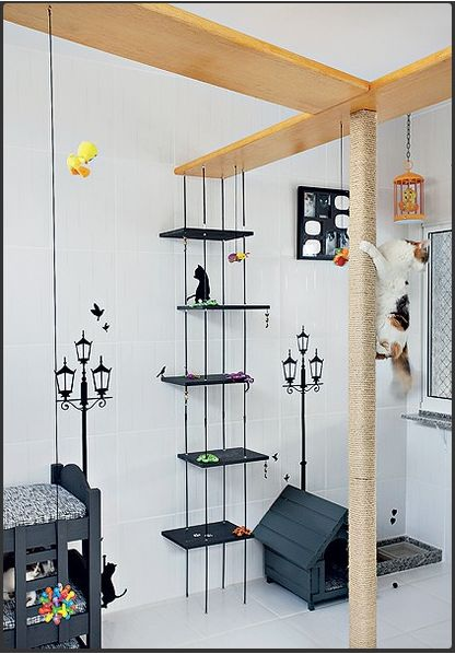 25 Best Ideas about Cat Play Rooms on Pinterest  Cat
