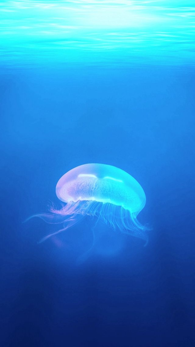 How To Make Video Wallpaper Iphone X Ocean Jellyfish Surreal Light Iphone 5s Wallpaper