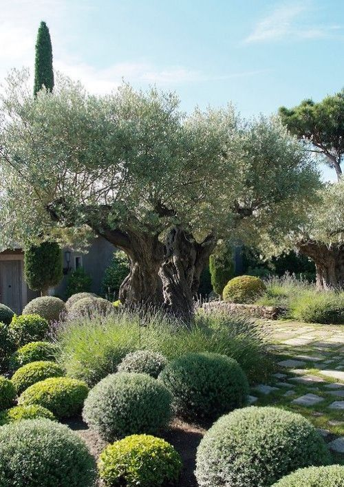 25 Best Ideas About Mediterranean Garden On Pinterest