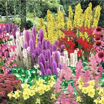 Effortless Perennial Garden  planting kit from Costco 75 plants that are hardy to at least