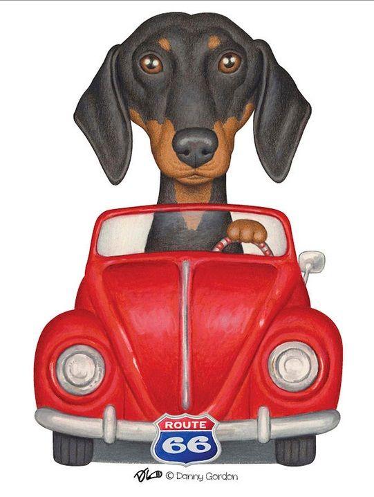 dachshund clube - danny gordon