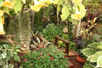 17 Best images about The Temperate Tropical Garden on ...