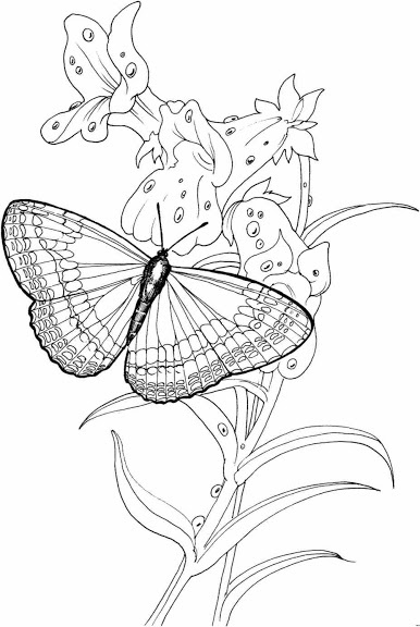 656 best images about Adult Coloring Pages on Pinterest