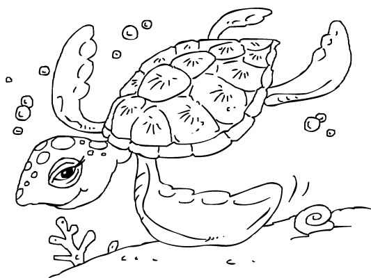 A beautiful sea-turtle for you to color in. You'll find