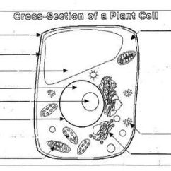 Plant Cell Diagram Animal Simple Drawing 2001 Jeep Tj Wiring Unlabeled Structure Great Installation Of Worksheet Blank