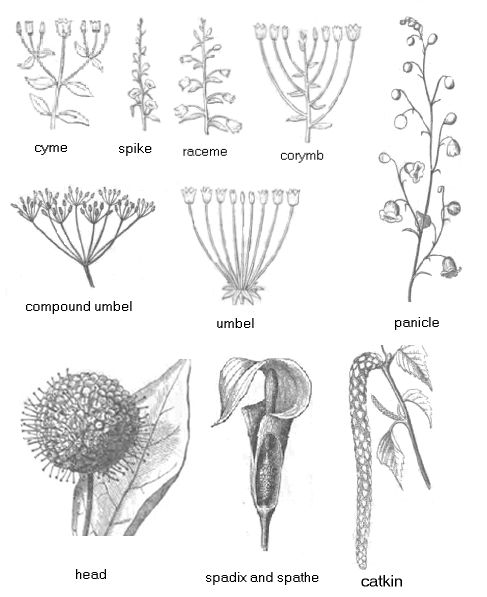 20 best images about wildflower id book for kids on