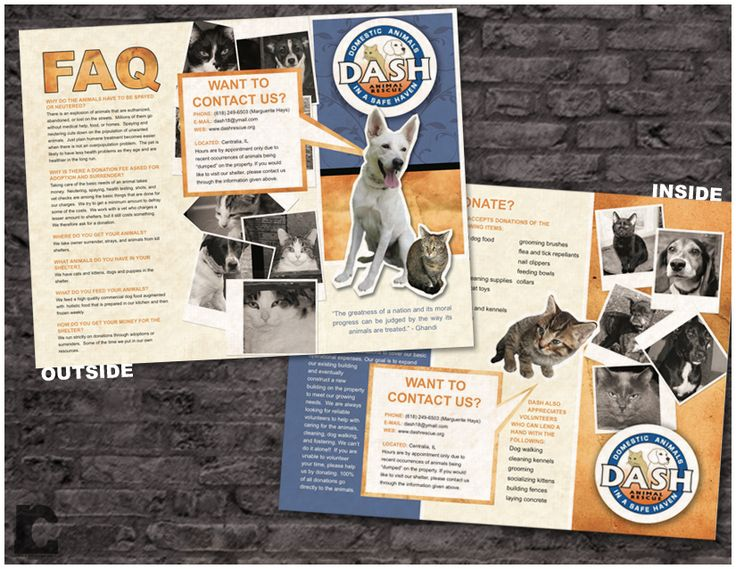 Bright And Playful Tri Fold Brochure For DASH Animal