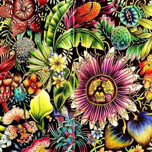 Johanna Basford Tropical World Free Coloring Pages Globalchin Coloring
