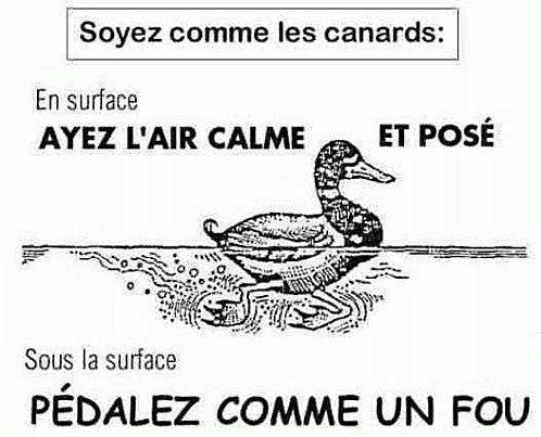 708 best images about Lecons francais-verbes on Pinterest