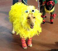 ber 1.000 Ideen zu Big Bird Costume auf Pinterest ...