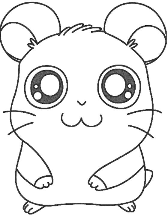 1000+ images about My Compassion: Hamster on Pinterest
