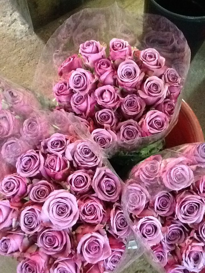 53 Best Images About Cool Water Roses On Pinterest