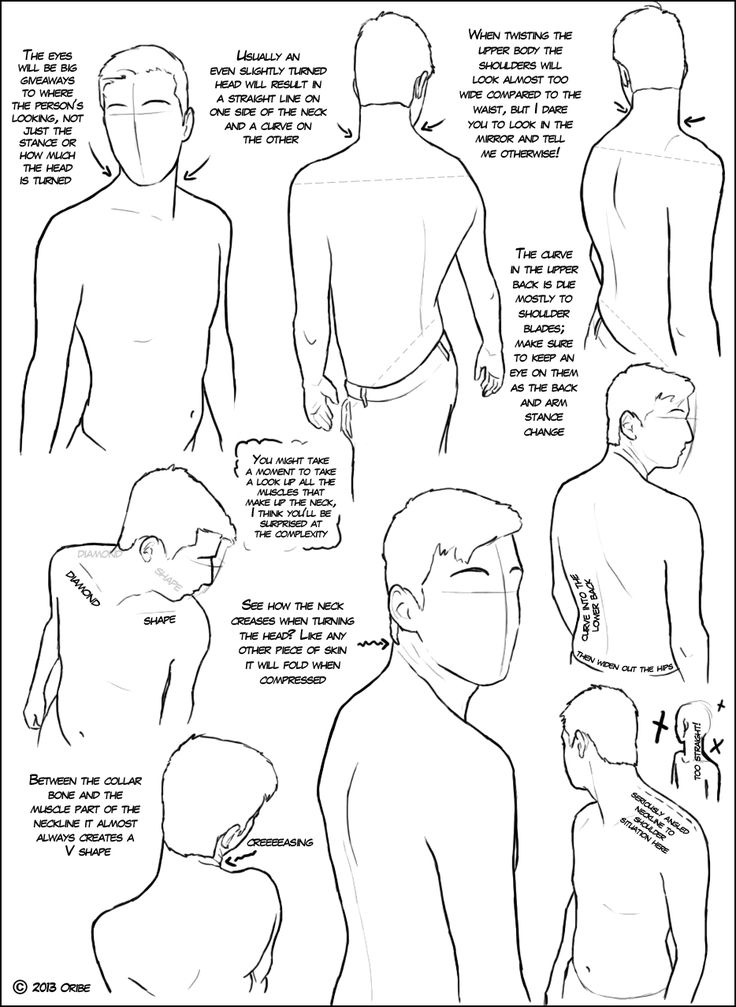 481 best images about Character Anatomy on Pinterest