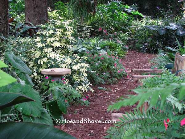 141 Best Images About Florida Gardening On Pinterest Persian