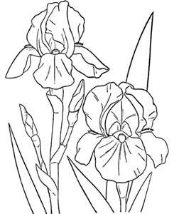 17 Best images about Spring coloring sheets on Pinterest
