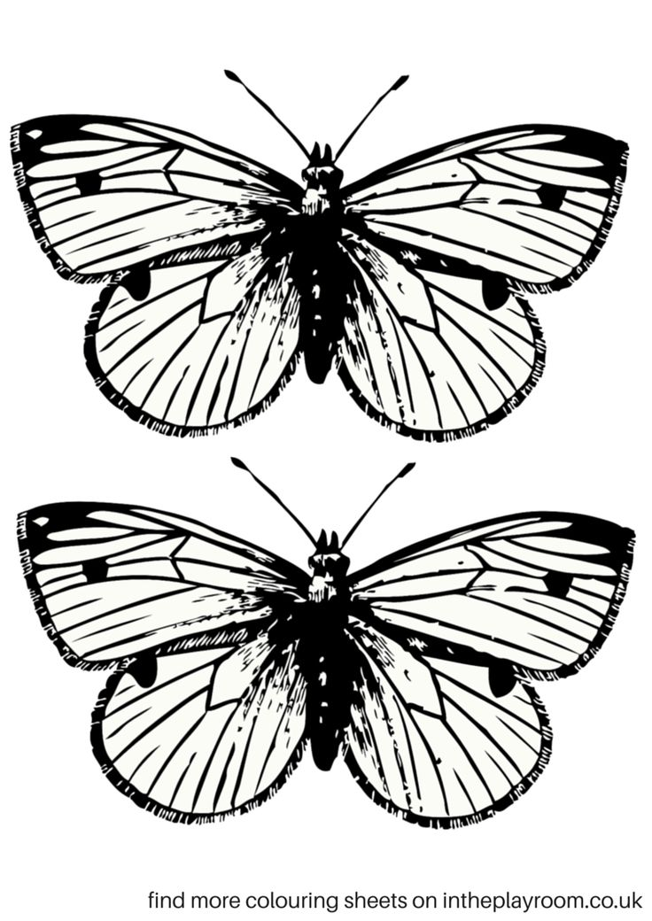 17 Best ideas about Printable Butterfly on Pinterest