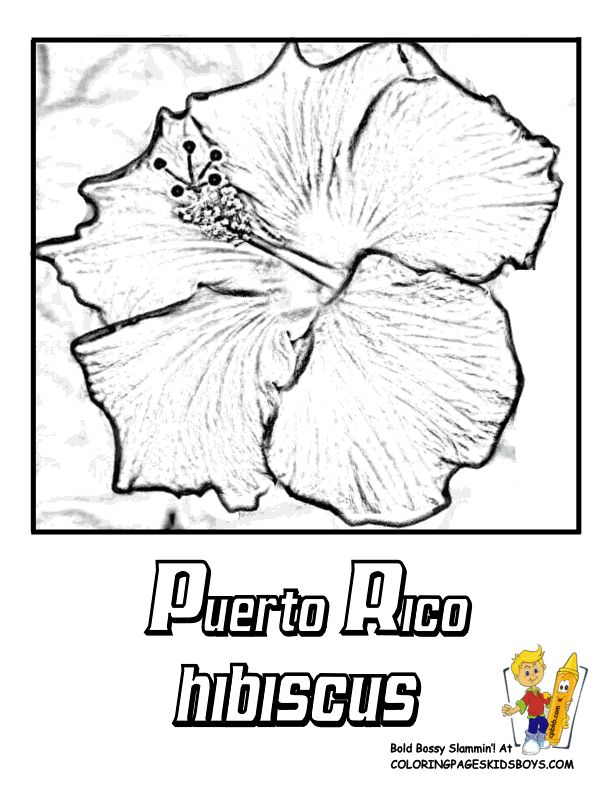 107 best images about Puerto Rico on Pinterest