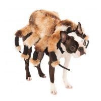 Best 25+ Spider dog ideas on Pinterest | Dog spider ...