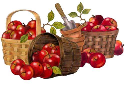 fruits &