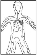 153 best images about Edu Circulatory System on Pinterest
