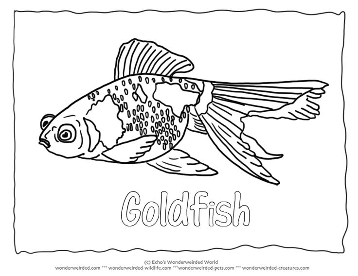17 Best images about :3 Animal Coloring Pages on Pinterest