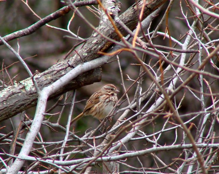 1000 images about Birds in West Virginia on Pinterest
