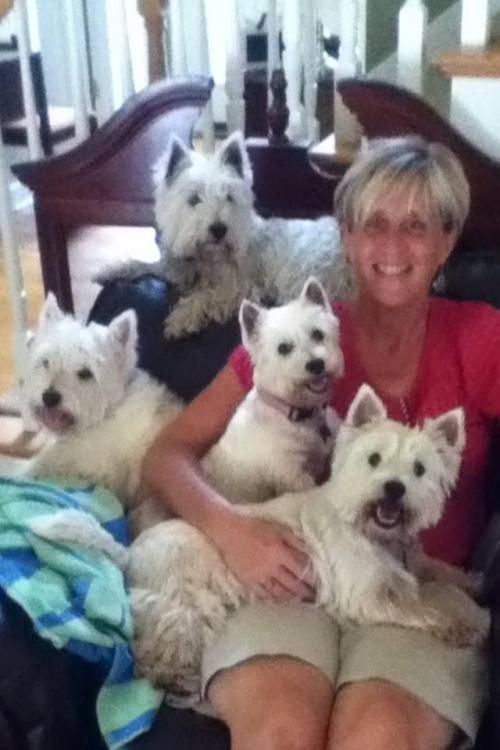 409 Best Images About Westie Mania On Pinterest White Terrier Best Dogs And Pet Beds