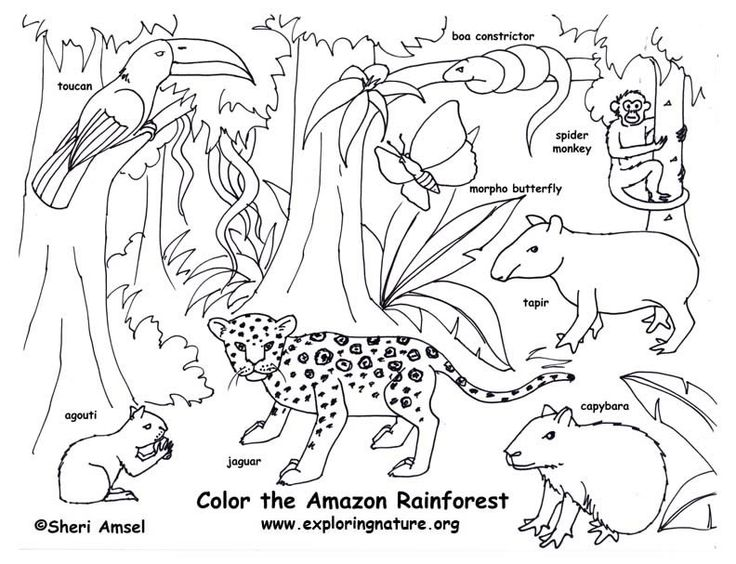 25+ best ideas about Animals of the rainforest on