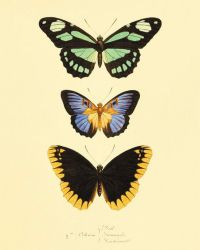 Green black Vintage Butterfly Print Nature print Natural ...