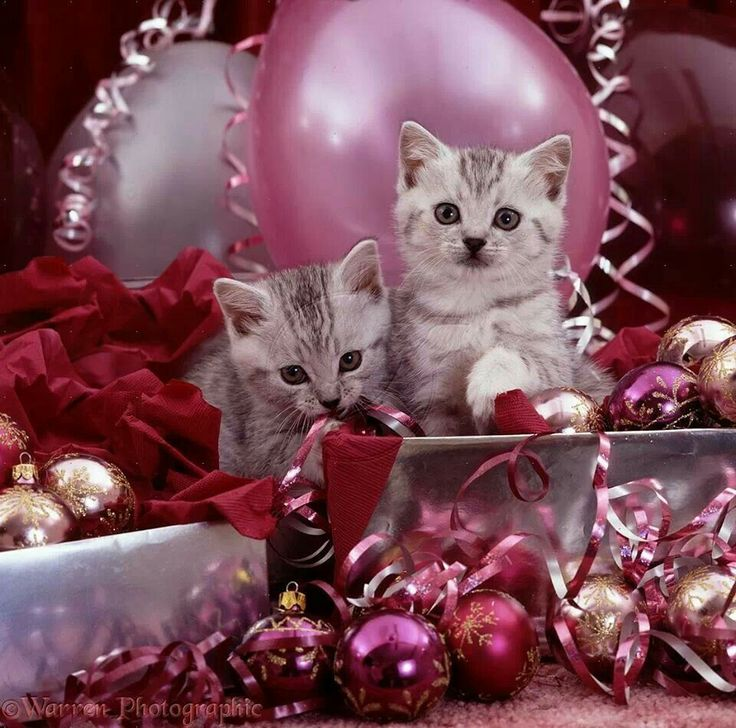 Cute Tofu Desktop Wallpaper 17 Best Images About Cats Birthday Wishes On Pinterest
