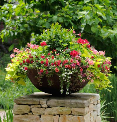 3084 Best Images About Container Gardening On Pinterest Window