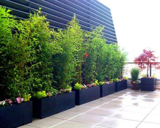 bambus sichtschutz auf terrasse balkon bambusborse pflanzen topfen, Terrassen deko