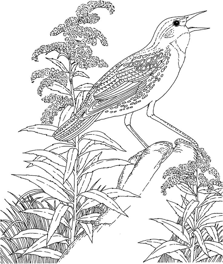 415 best Birds images on Pinterest