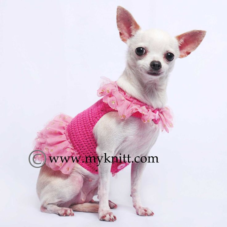 17 Best images about Myknitt Dog Clothes on Pinterest