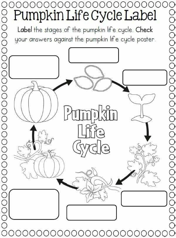 17 best images about teaching: pumpkins on Pinterest