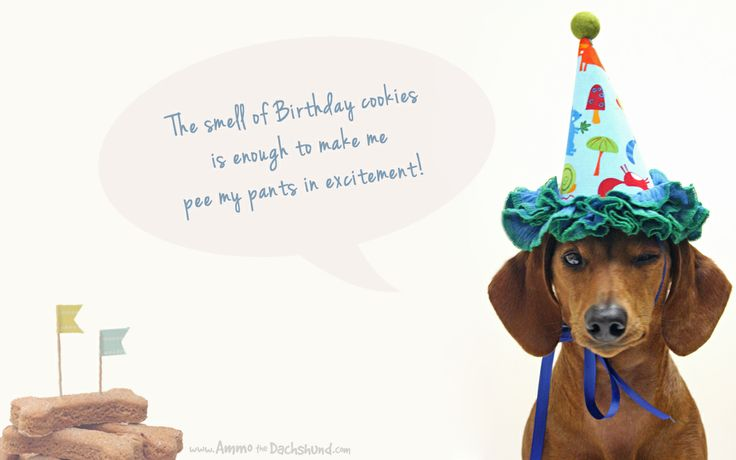 Happy Birthday Images With Dachshunds Birthday Week