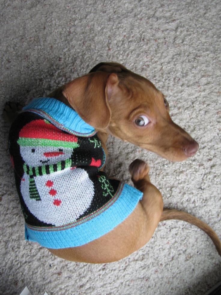 17 Best Images About Wiener Dog Co Dependant On Pinterest