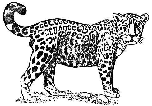 Jaguar Coloring Pages For Kids jaguar colouring pages for