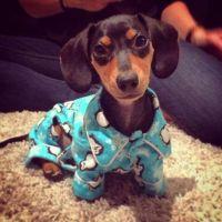 972 best images about Weenie Dogs on Pinterest   Weenie ...
