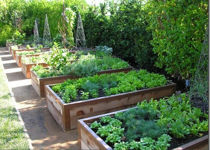 25 Best Ideas About Raised Vegetable Gardens On Pinterest