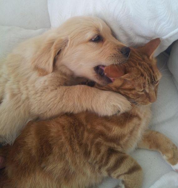 17 beste afbeeldingen over Best friends op Pinterest - Huisdieren ...