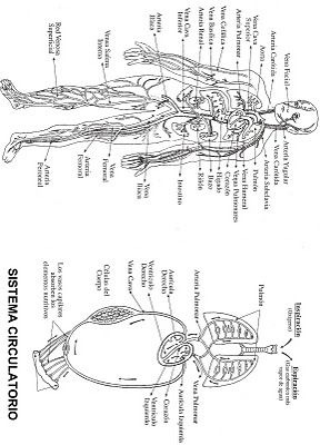 Spanish Human Body Ps Diagram Spanish Calendar Diagram