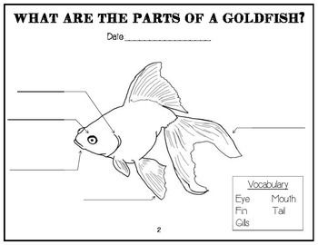 7 best images about Goldfish & guppies on Pinterest