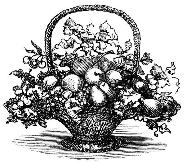 basket of fruit clip art black