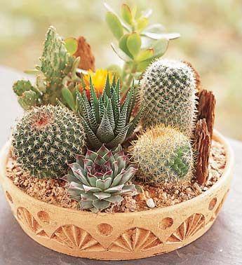 25 Best Ideas About Indoor Cactus Garden On Pinterest Terrarium