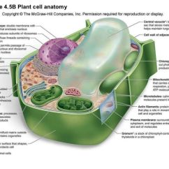 Euglena Diagram Blank Clustering In Sql Server 2008 With Labeled Plant Cell And Functions | Molecular Biology Visual References Pinterest Search ...
