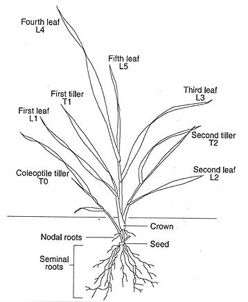 121 best Plant Morphology images on Pinterest