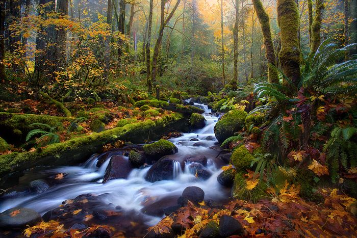 Majestic Fall Wallpaper Most Beautiful Waterfalls In Oregon Rainforest Autumn