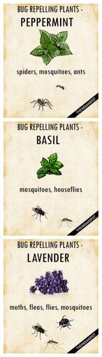 25+ best ideas about Plants on Pinterest | Plant ...