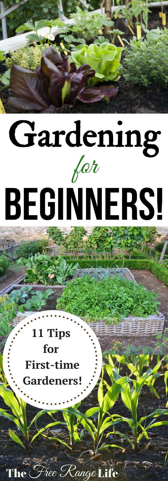 25 Best Ideas About Gardening For Beginners On Pinterest